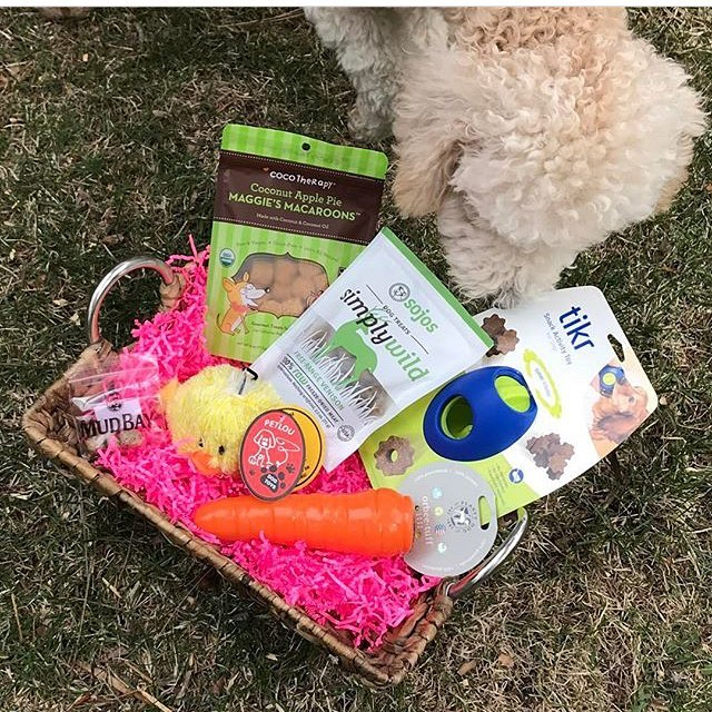 @adventuresofkoa received an amazing visit from the Easter bunny!! Enjoy your Tikr Koa!!! #dogenrichment #dogsofinstgram #goldendoodle #labradoodle #poodle #doodlesofinstagram #easter #easterbunny