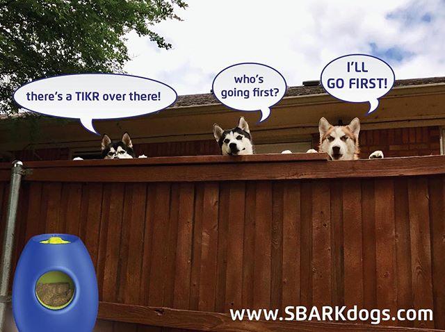 www.sbarkdogs.com