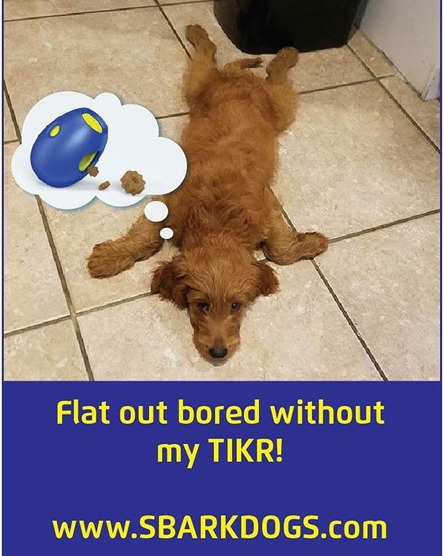 Bored pup? ...TIKR can help! www.sbarkdogs.com