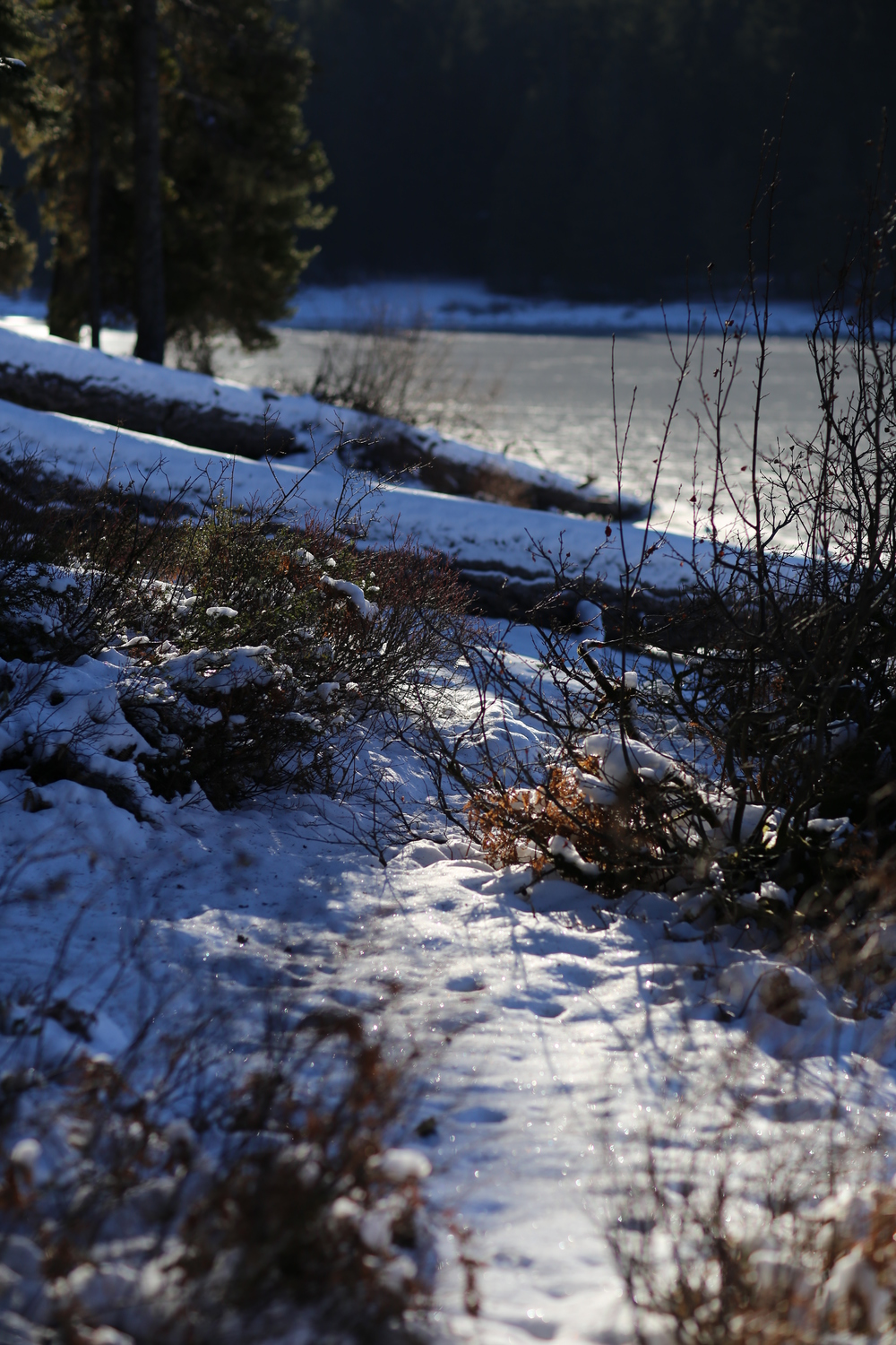 Snowy trail along the shoreline