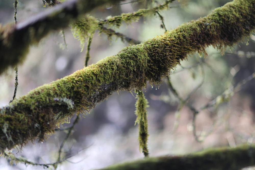 Moss Above Snoqualmie River