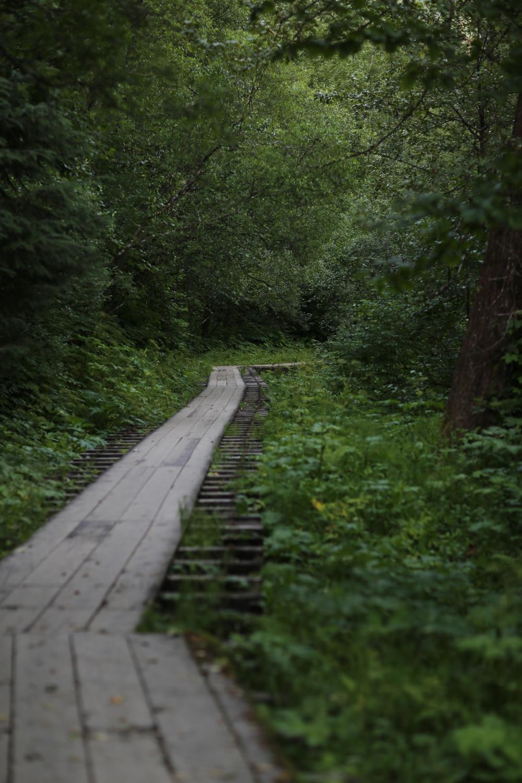 Boardwalk along the Gold Creek Flume Trail