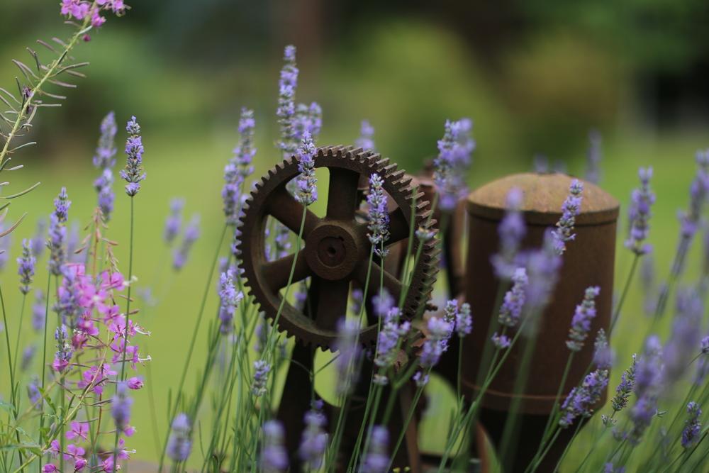 Flowers in his garden park