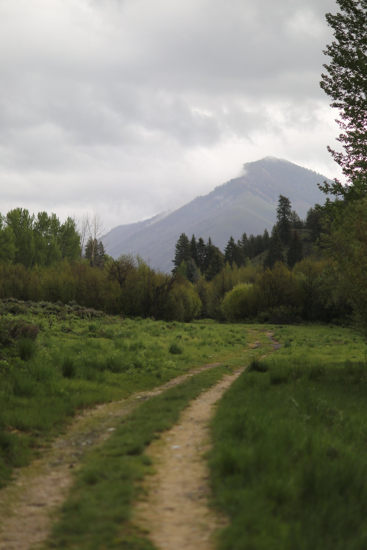 Hiking on old roads beside Trail Creek