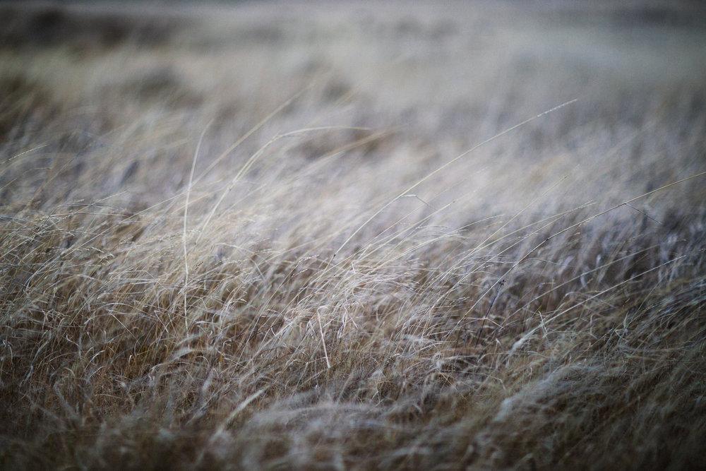 Grass by the seaside, near Grótta