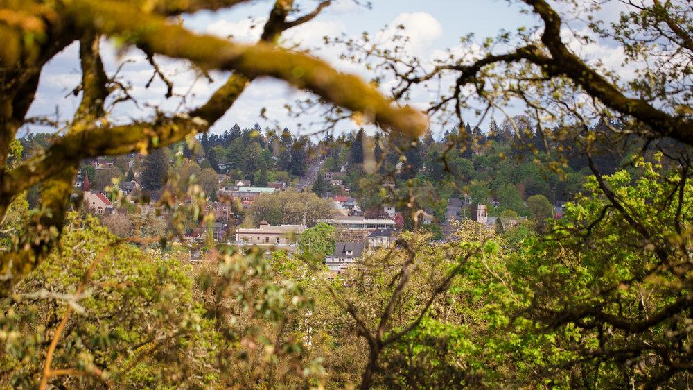 Oregon City, seen through oak branches