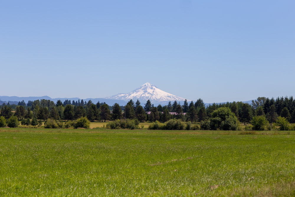 Mount Hood looms beautifully above the farm