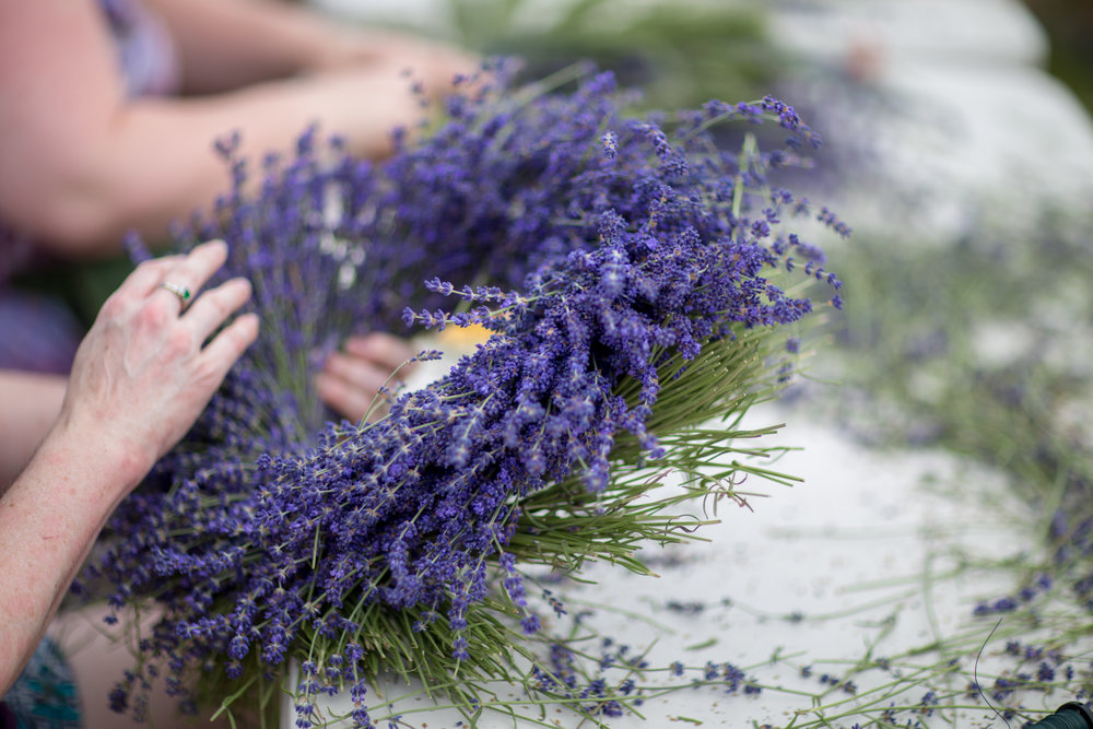 Crafting gorgeous lavender wreaths