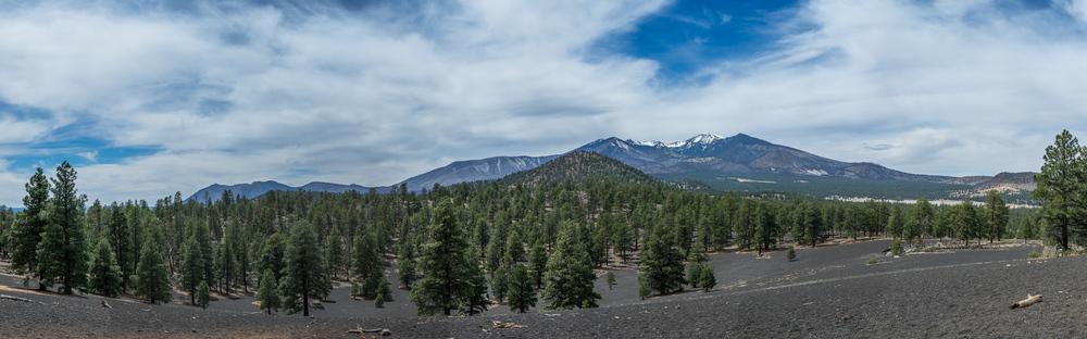 Blick auf den Humphreys Peak vom Lenox Crater Trail..