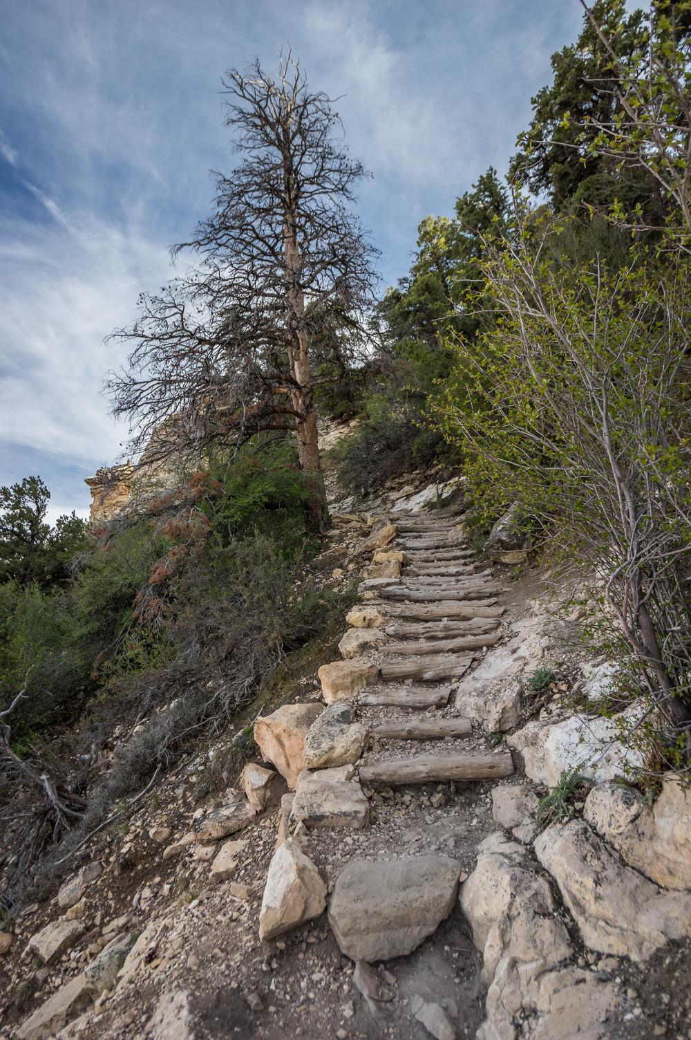 Ein Weg in die Tiefe. Die Wege zum Colorado sind recht gut ausgebaut.