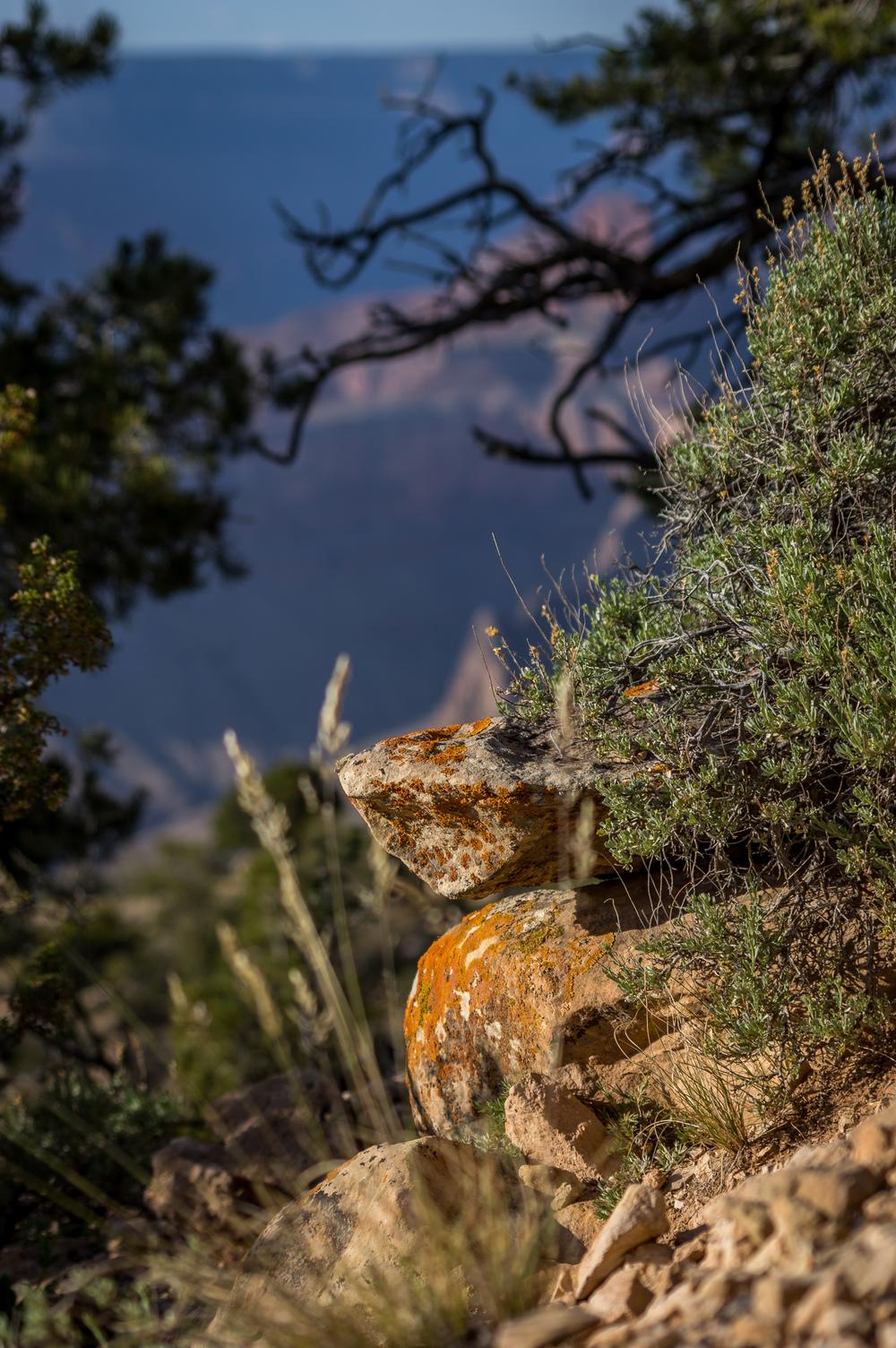 Die Vegetation wirkt in diesem Teil des Grand Canyons fast mediterran.