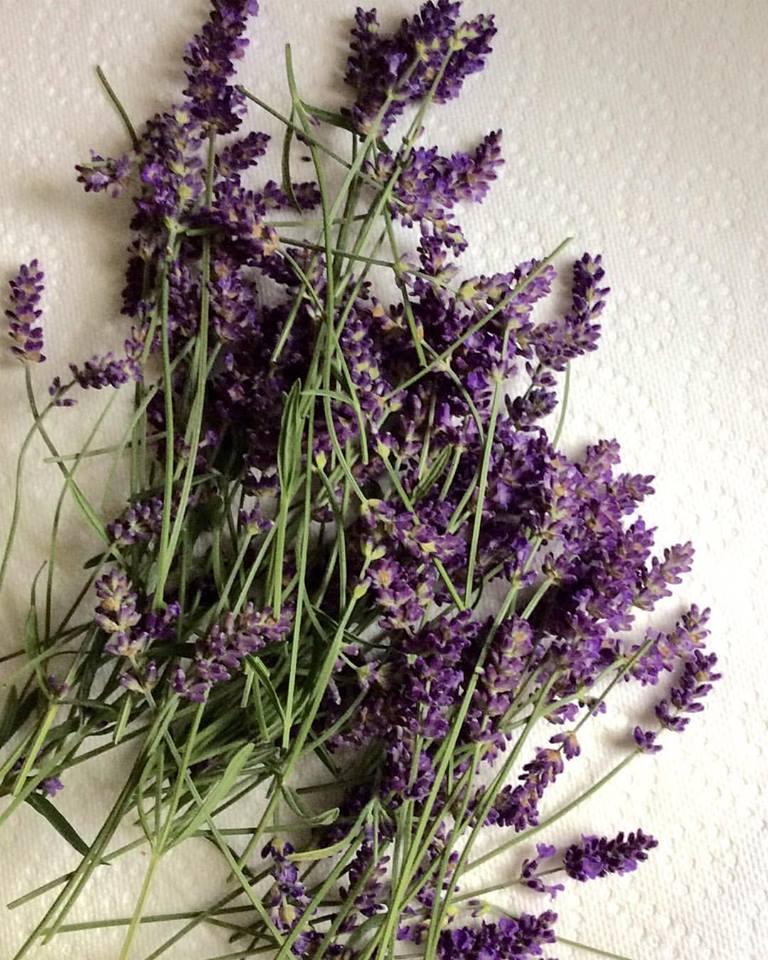 Hand Picked Lavender From Maggie's Garden-maggiegmiller.com