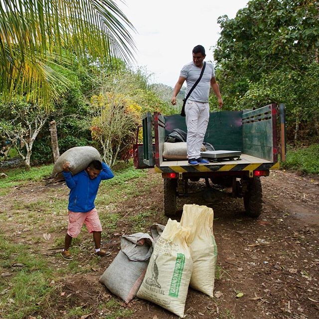 While Don Valeriano sells high-quality cacao to the Pangoa Cooperative, he also sells lower-quality beans to middlemen who deal with mass market chocolate companies. We looked on as they loaded the truck, weighed the beans, and handed over the cash before moving on to the next farm down the road.