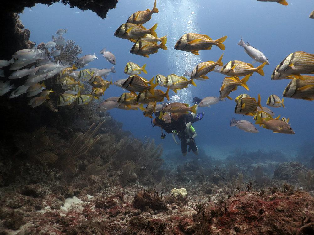 Foto de Adriana Otero excelente submarinista y fotógrafa de las profundidades