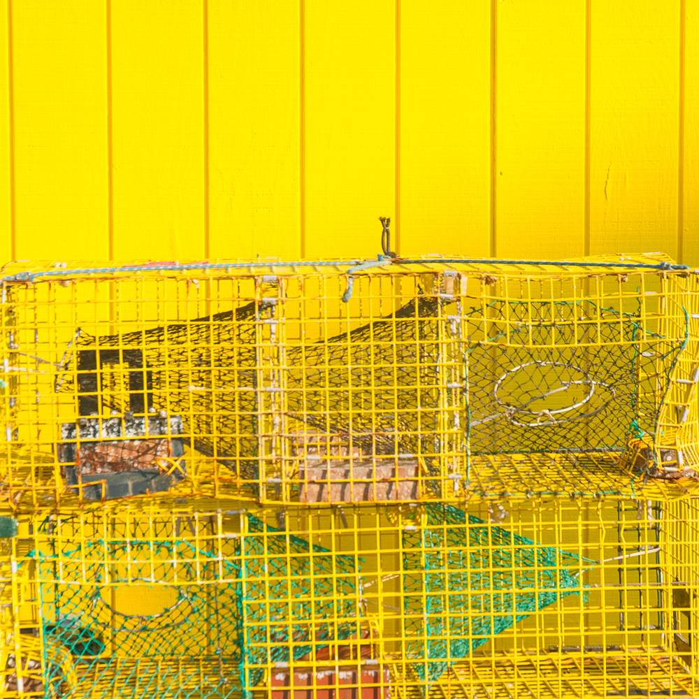 Yellow Traps