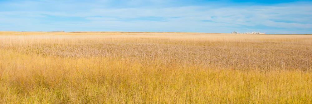 Badlands Grasslands - Badlands National Park