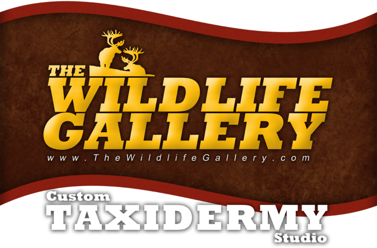 The Wildlife Gallery Custom Taxidermy Studio