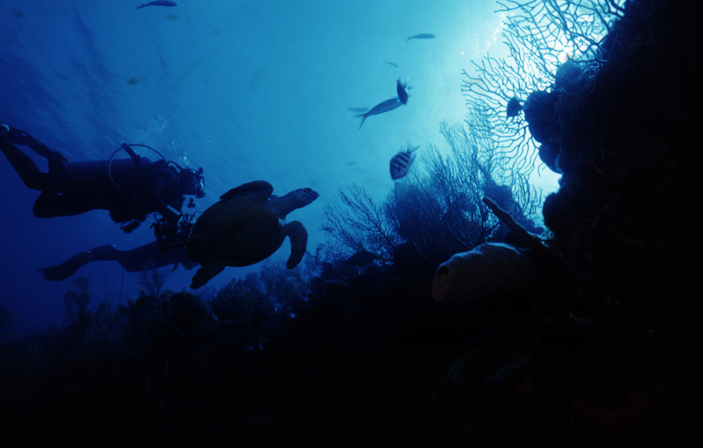 Diverssea