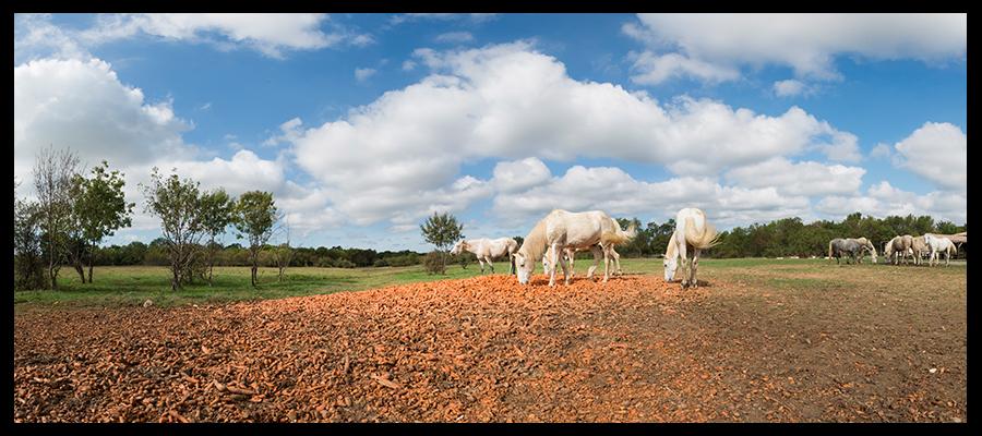 chevaux mas des pauvres