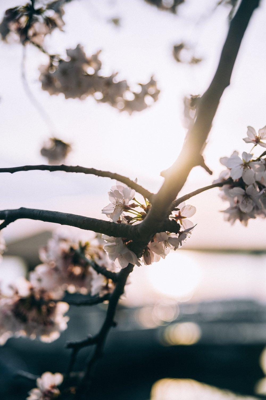 Spring19.jpg