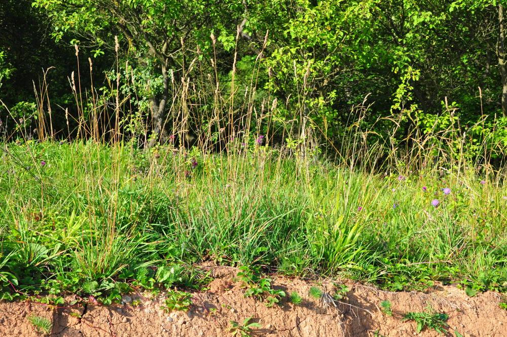 Přirozená vegetace na jílovité půdě. Berounsko. foto: Tereza Mácová