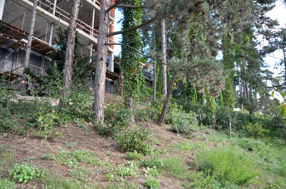 Zahrada ve chvíli vstupu zahradního architekta na zahradu - bylo zapotřebí dohodnout veškeré materiálé přechody, vedení terénu kolem fasády, umístění retenční nádrže, naplánovat vedení zavlažovacího systému, uložení půdy, co s odpadem ze stavby, ochranu stávajících stromů a veškeré návaznosti na dům. foto: Tereza Mácová