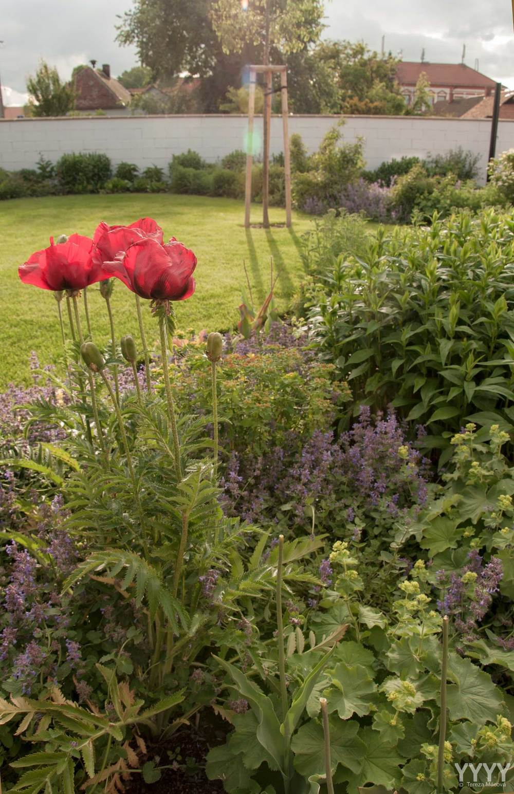 """Rostlinám dobře vybraným dle přírodních podmínek se přirozeně daří a není třeba je """"dopovat žádnými aditivy"""". (zdroj foto: Tereza Mácová)"""