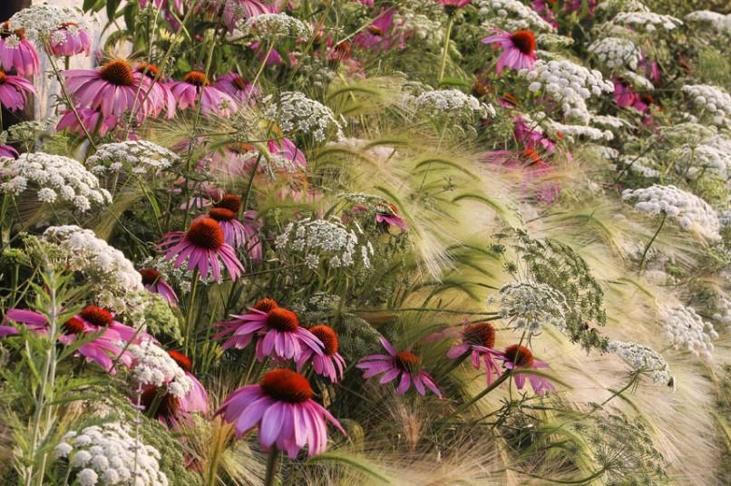 A pak to u Vás příští léto může vypadat třeba takto narozdíl od vyschlého úhoru s pozůstatky trávníku u sousedů:-) (zdroj foto: Telegraph co.uk; Rosanna Castrini )