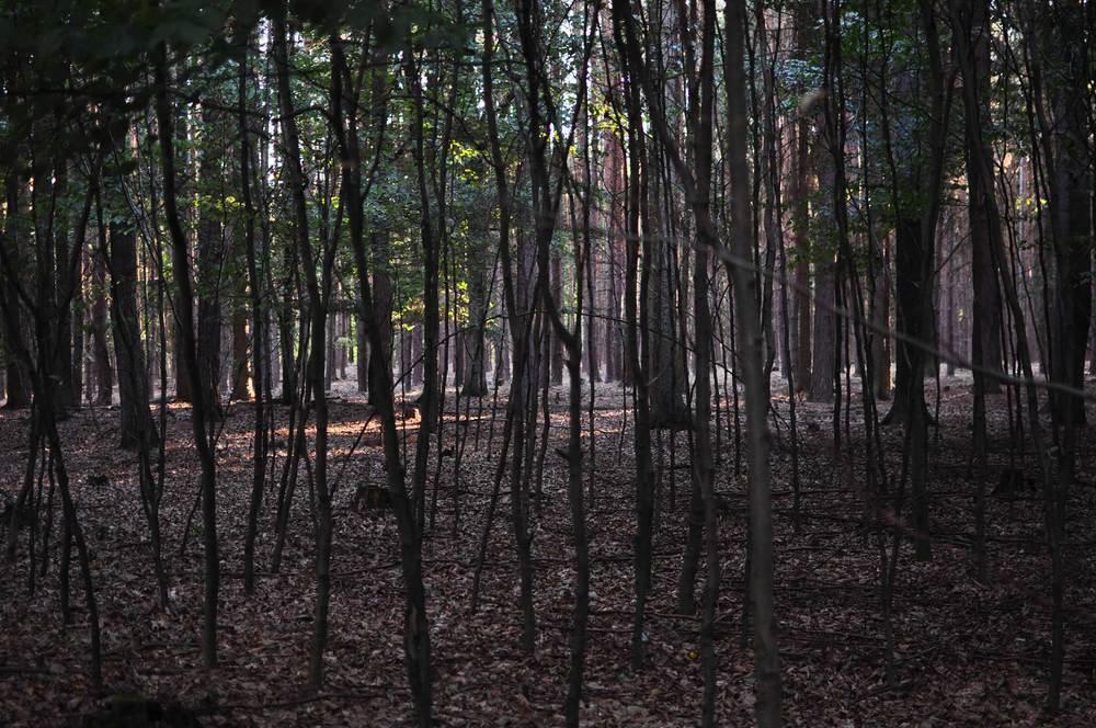 V přírodě vlastně mulč jak jej známe ze zahrad neexistuje - v lese je to opadanka a zbytky zetlelých dřevin, které takovou funkci zastávají. Inspirovat se přírodou je nasnadě - primárněby nám mělo jít o materiály, které mají životnost kolem dvou let, a poté se rozloží a nejlépe ještě vyživí půdu. (foto zdroj: Tereza Mácová)