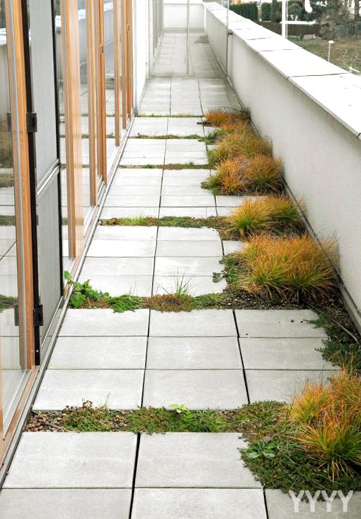 Zahrada může vzniknout i ve spáře dlaždic na terase. Jde jen o správné nastavení podmínek k růstu.