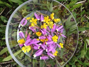 flowers in bowl.jpg