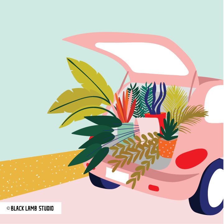 car-with-plants.jpg
