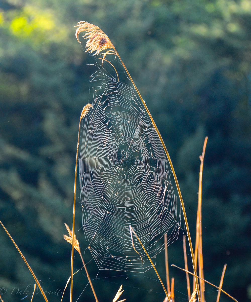 eeeek !! a spider !!!