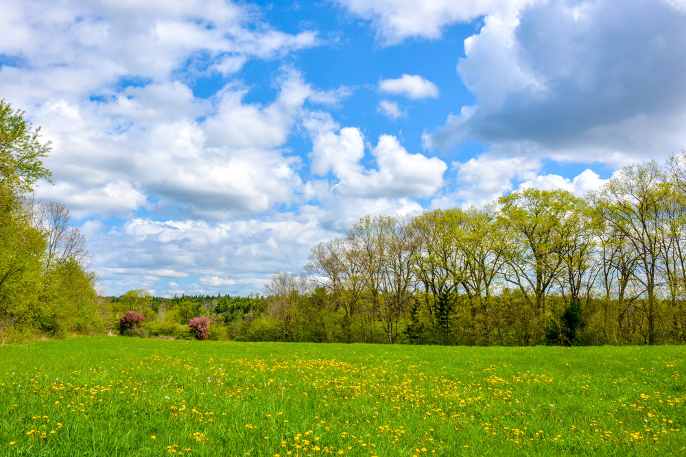 A spring meadow at Ware River Watershed. Its part of the DCR Quabbin watershed in Rutland MA.