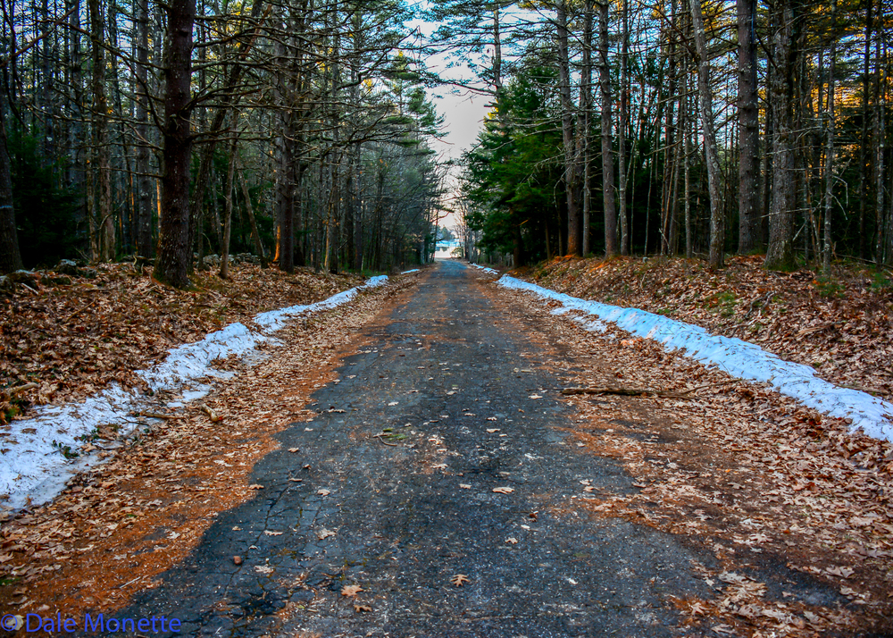 Snow is melting fast on all the roads and hiking trails.  Easy access to both people and animals.