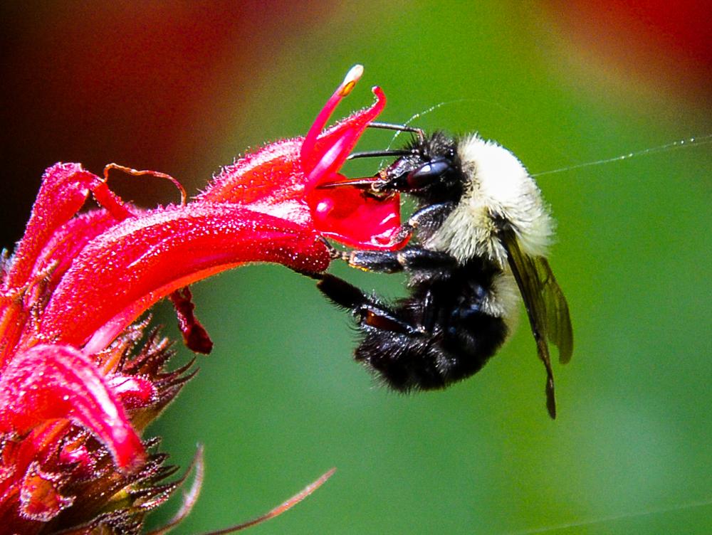 Bumble bees bumble …...