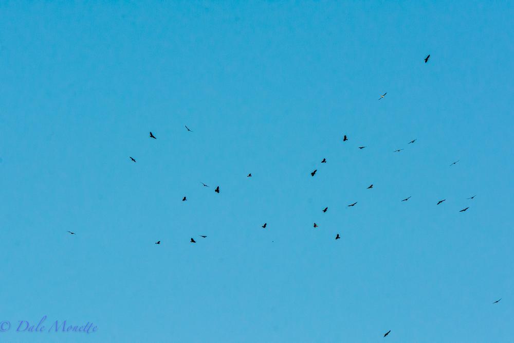 more hawks