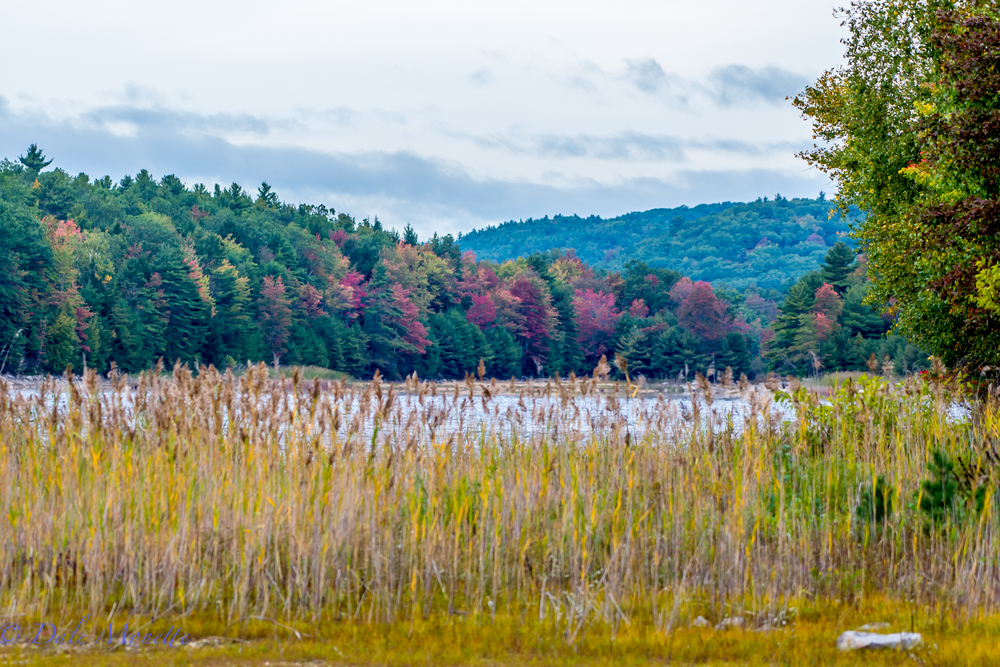 October 1st, 2015  Autumn is coming on at the Quabbin !