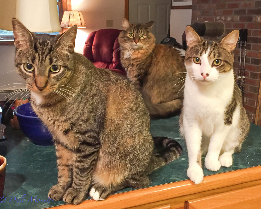 Here's a family portrait.  I am alway in good company with helpers in here at my desk working on my computer or running my ham radios.