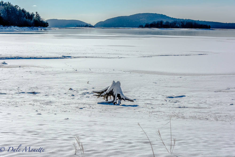 A lone stump of a tree that was cut in the mid 1930's and is under the water most of the time,  sits on the Quabbin shoreline on a zero degree F day on January 8, 2017.  The tree was cut to clear the valley of all trees to make room for the giant 18 mile long Quabbin Reservoir.