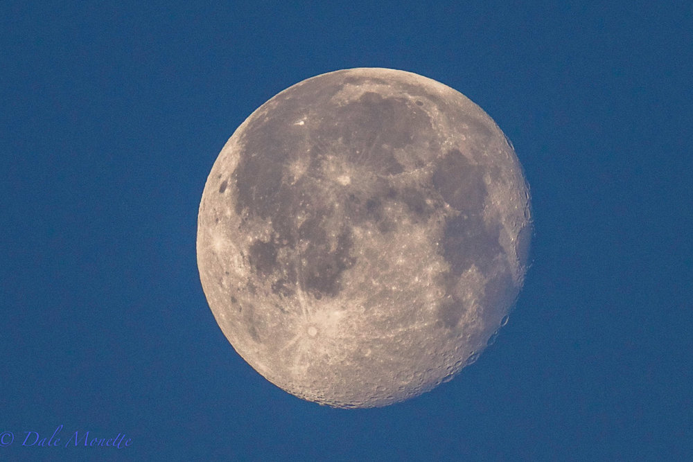 Not an animal but I couldn't resist taking this shot of the moon over Quabbin  early morning on 11/6/17