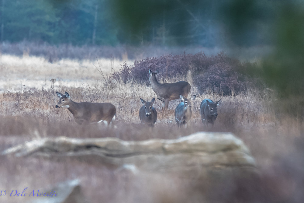 Speaking of deer, for a minute I thought my lens was broken and I was seeing five of everything!!