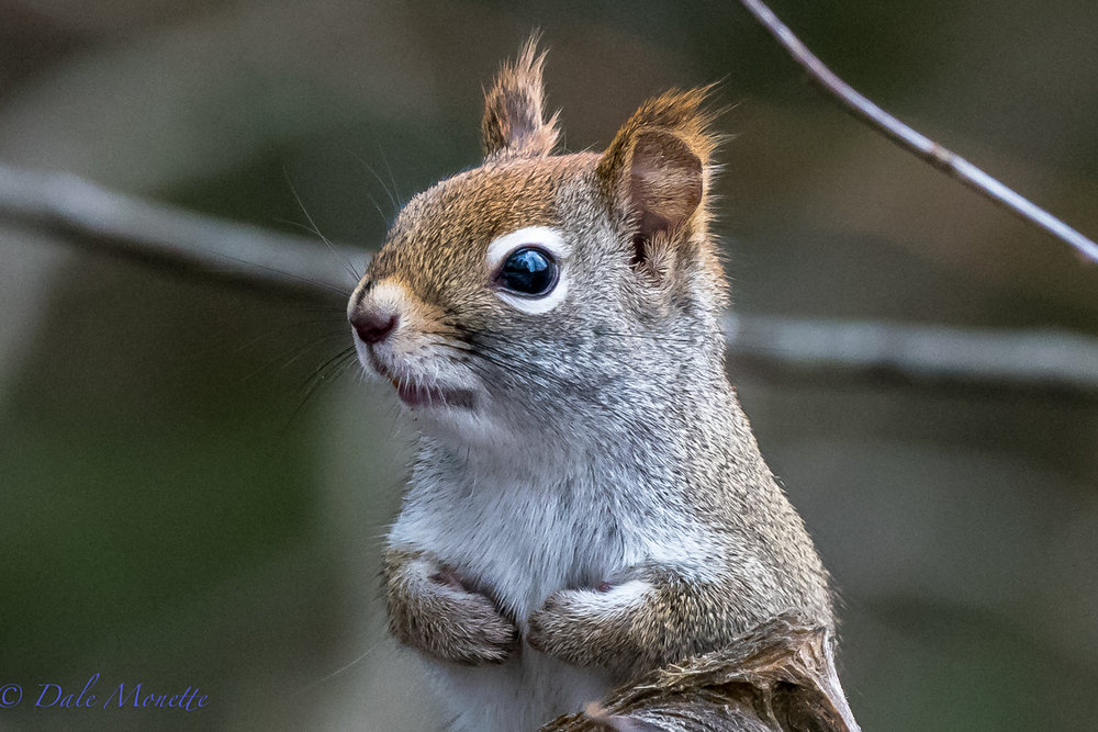 """""""Hey pal, can you spare an acorn or some sunflower seeds ?"""""""