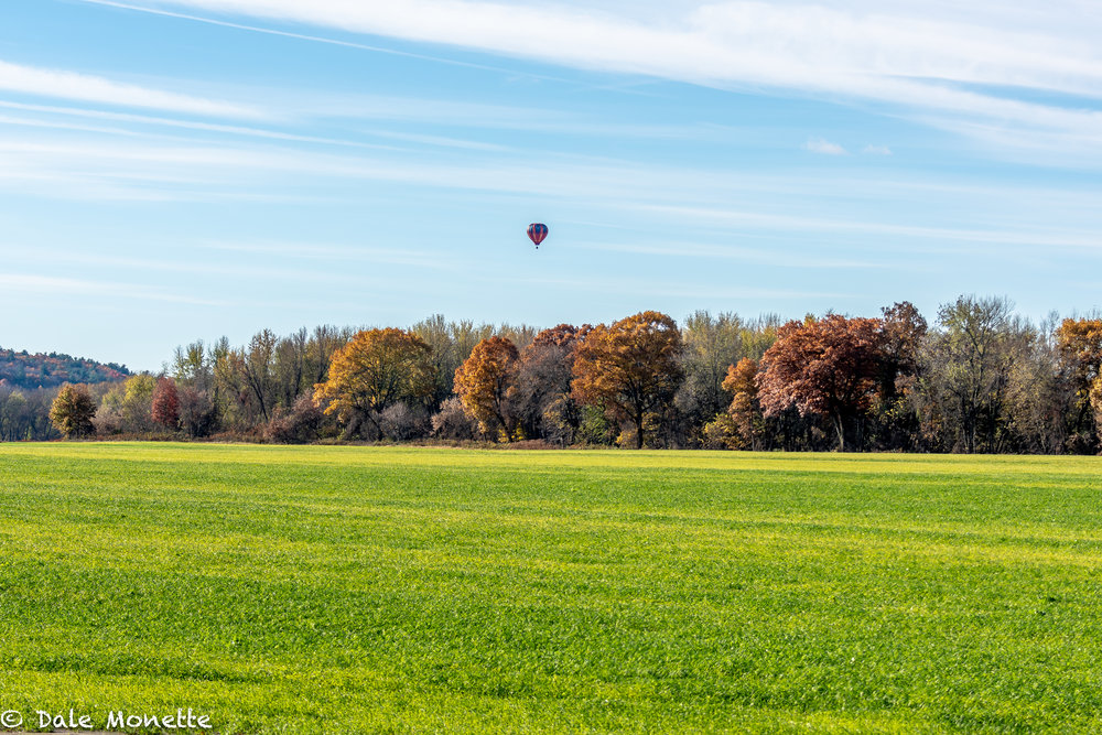 I spotted this hot air ballon flying along the Connecticut River this morning as I was headed north on RT 47 looking for cattle egrets !