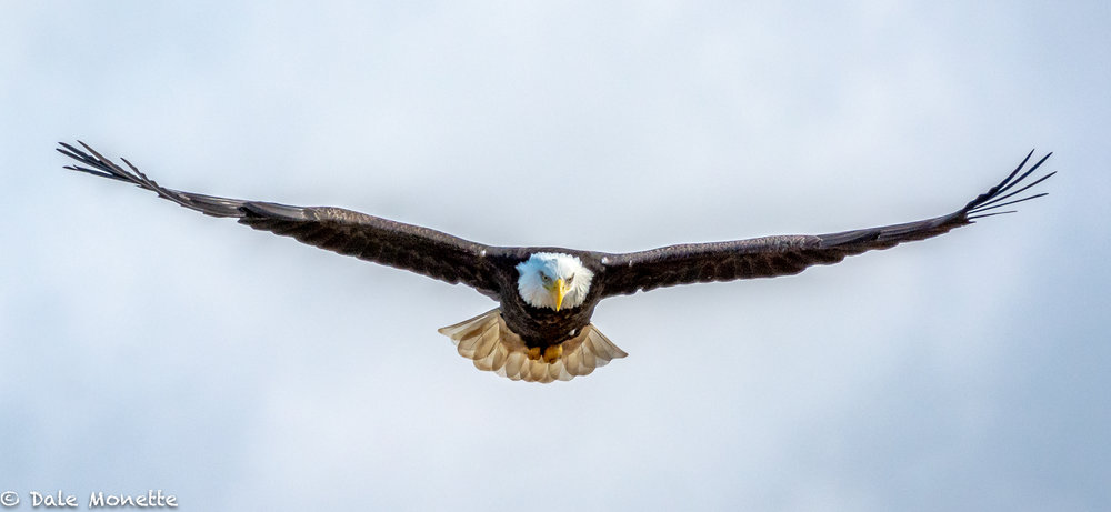 Any day I see and eagle is a good day.  I wonder if any day an eagle sees me, he feels the same way?
