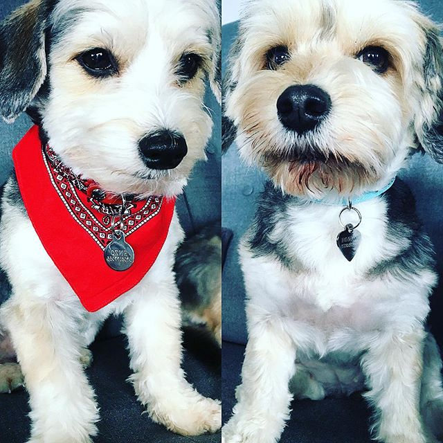 Details! 🐶🐶✨❤️💙 for my twins  Bonnie&Enzo to! Name-Necklace, scarfs and bling bling before we go out... #weekenddetails #weekenddiaries #dogslife #pets #stylediaries #lifestyles @galinanurmi