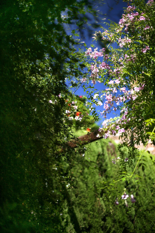 Garden atop Málaga's Alcazaba on the climb up