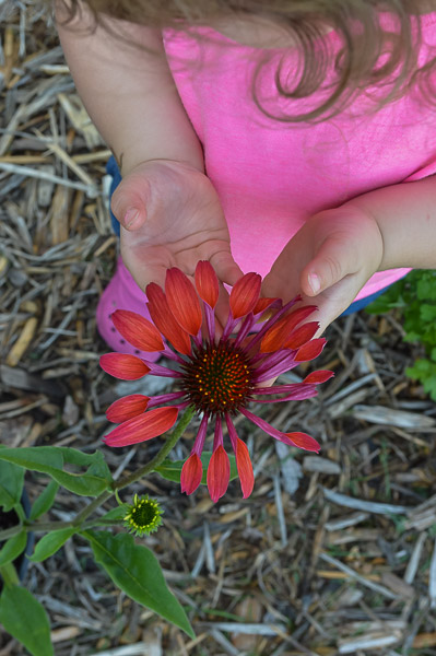 Brooke (2) with 'Hot Summer' Echinacea