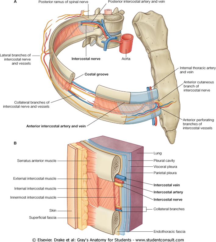 Thoracentesis - Guide — IMRESPDX