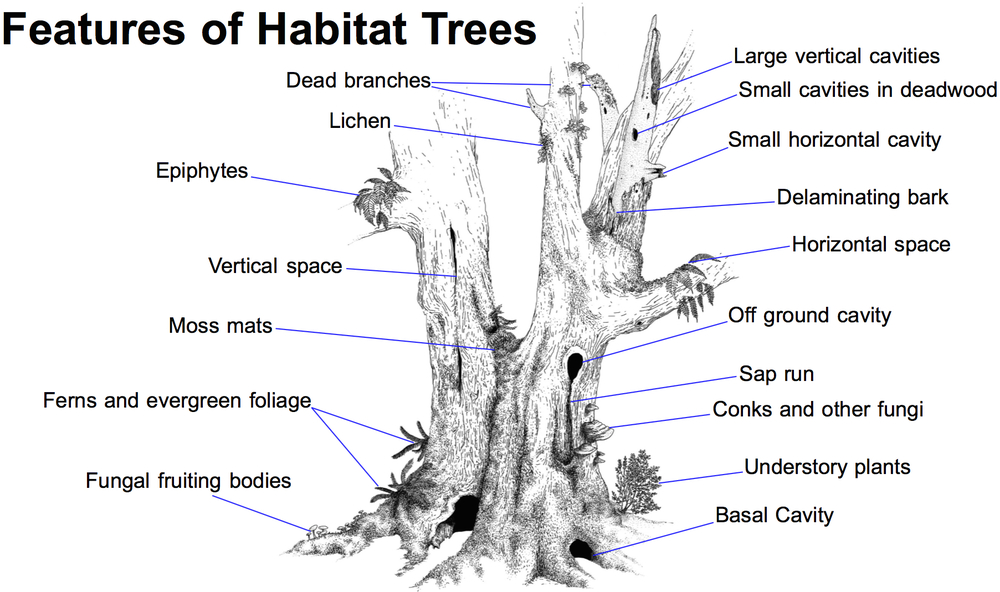 often trees or parts of trees that offer the most habitat are condemned as